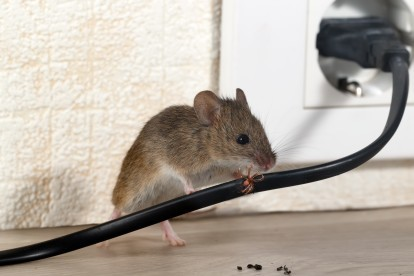 Pest Control in Becontree Heath, Becontree, RM8. Call Now! 020 8166 9746